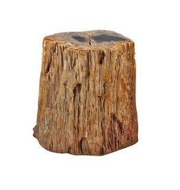 Versteend hout stam (deels gepolijst) 10 x 9,5 x 11,5 cm / 1,9 kg
