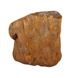 Versteend hout stam (deels gepolijst) 13 x 9 x 14 cm / 2,88 kg