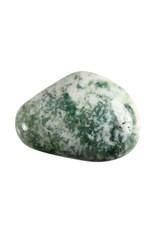 Boomagaat steen