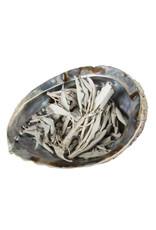 Abalone schelp met witte salie