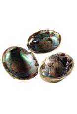 Abalone schelp met hematiet ontlaad mix