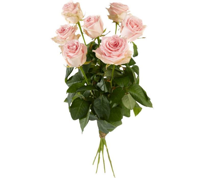 Rozen roze lang