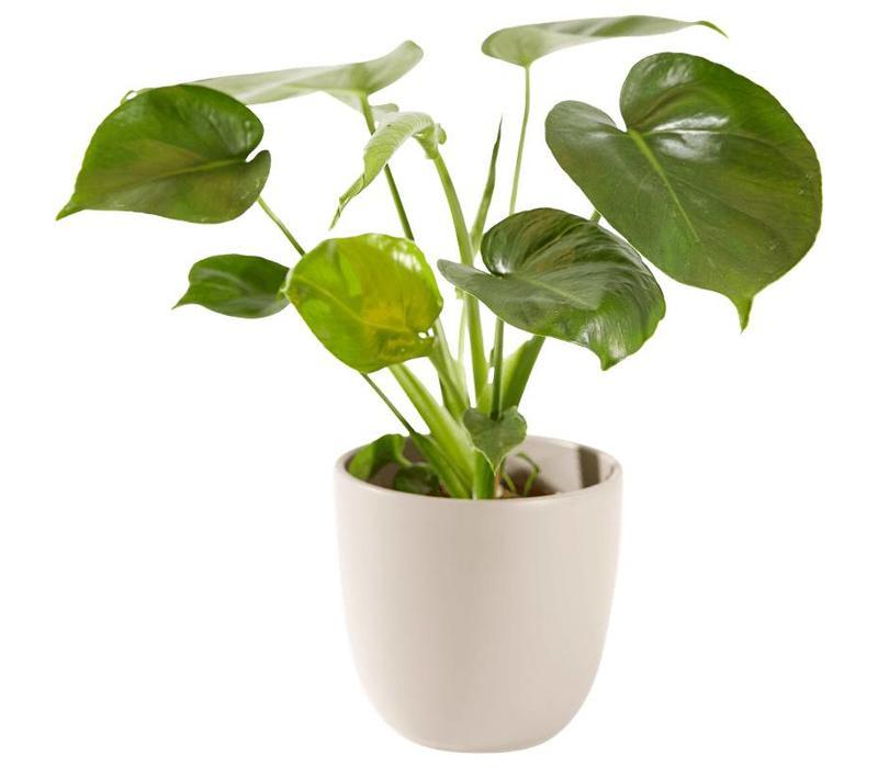 Groene plant inclusief pot