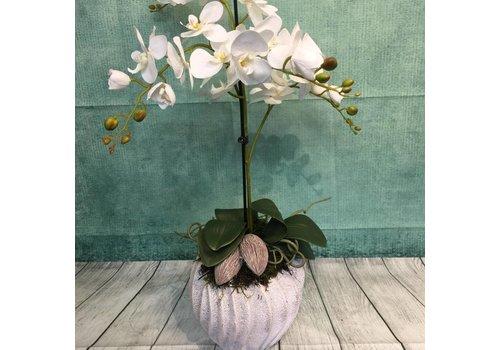 Zijdestuk phalanopsis