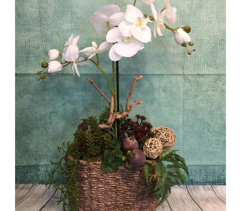 Zijdestuk ovaal orchidee