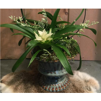 Boog Orchidee