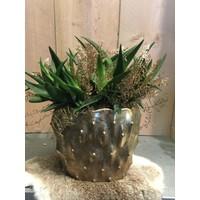 Plant decoratie gouden pot