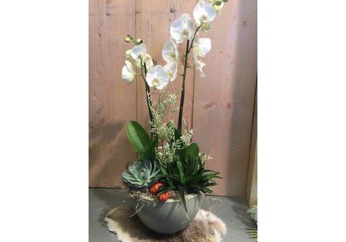 Orchideeën arrangement