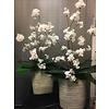 Witte Bloesem in cement-kleurige vaas met grote Spathiphyllum bladeren