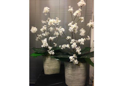 Witte Bloesem in cement-kleurige vaas
