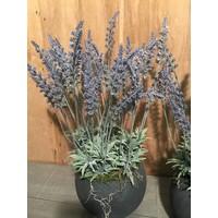 Lavendel in grijze sierpot
