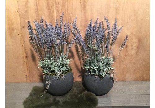 Ron Lavendel in grijze sierpot