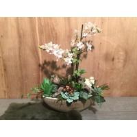 Schuitje met licht-roze Orchidee