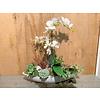 Ron Witte schuit gevuld met witte Orchideeën en vetplanten