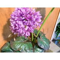 Lila Allium in metalen vaas