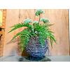 Ron Bereklauw met palmbladeren in ronde mand