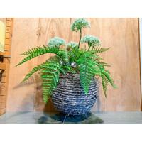 Bereklauw met palmbladeren in ronde mand
