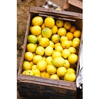 Gekonfijte Beldi citroenen