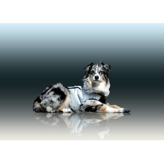 cani.cool Dog Cooling Vest
