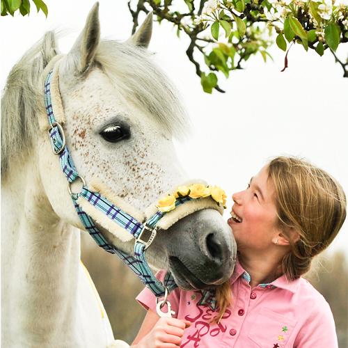 Sterre van Hart voor Paarden