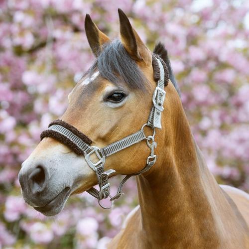 Henja van Hart voor Paarden