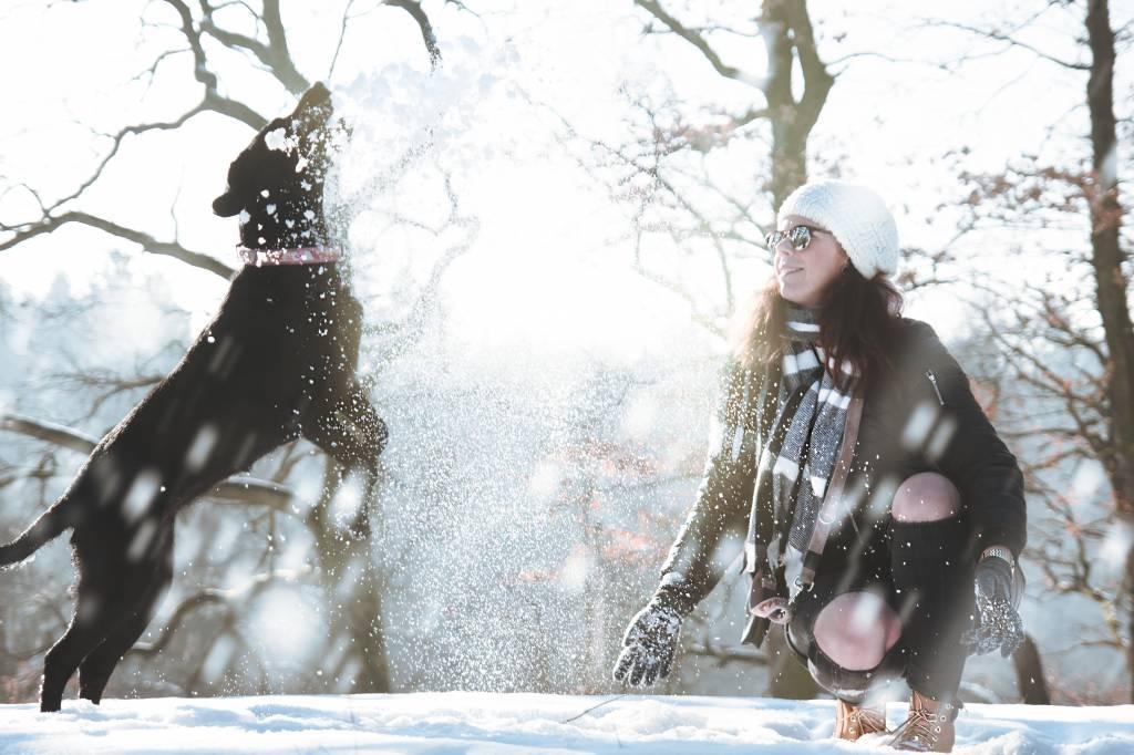 Toben im Winter – Wenn Hunde den Schnee zum Fressen gernhaben