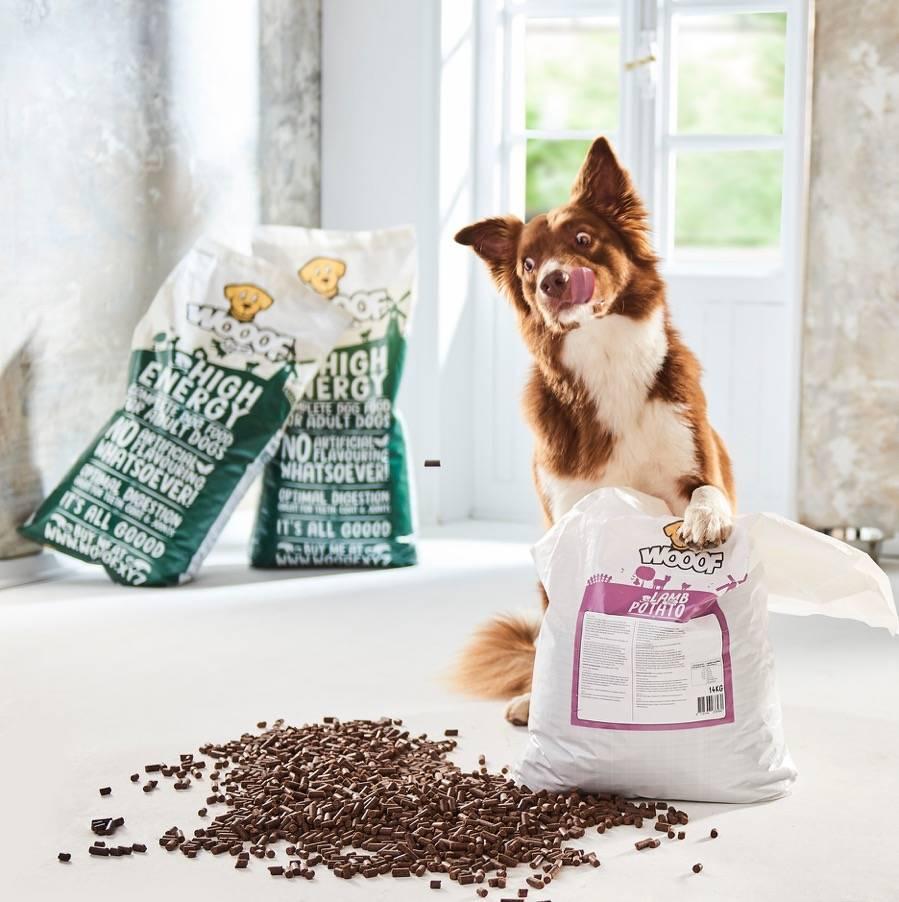 Welches Futter passt zu deinem Hund?
