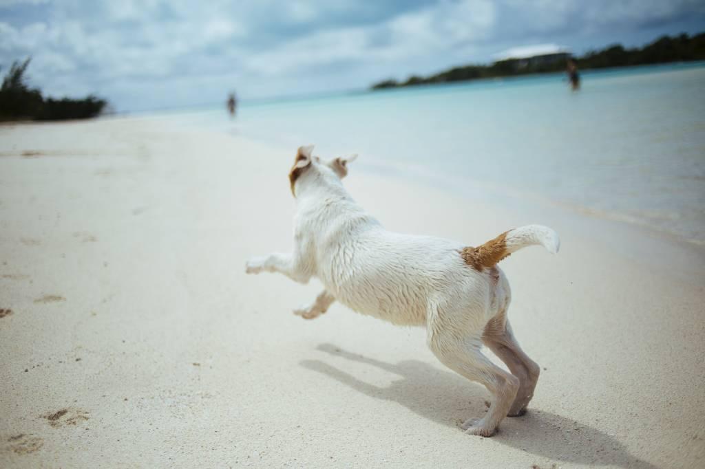 Cool bleiben: So kommt dein Hund gut durch den Sommer