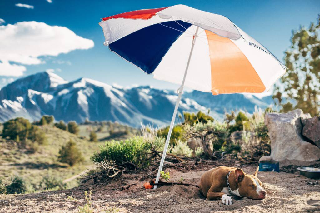 Reisen auf vier Pfoten: Urlaub mit Hund