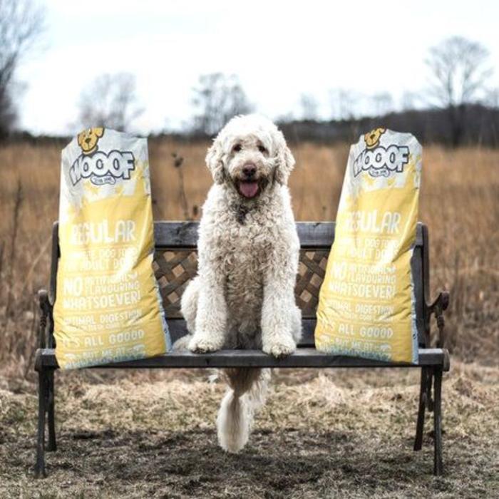 Futterumstellung bei Hunden