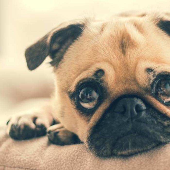 Herstellungsarten: Was ist kaltgepresstes Hundefutter?
