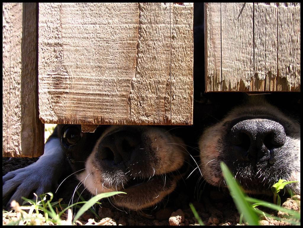 Quiz: Was weißt du über Hundeernährung?