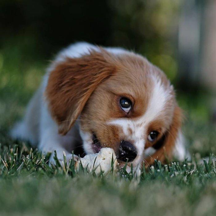 Kohlenhydrate in der Hundeernährung