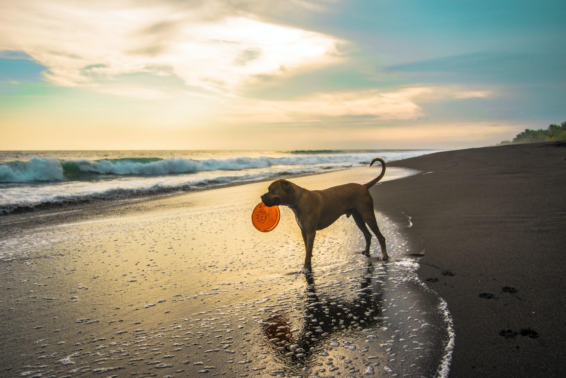 Das richtige Hundespielzeug für deine Fellnase!