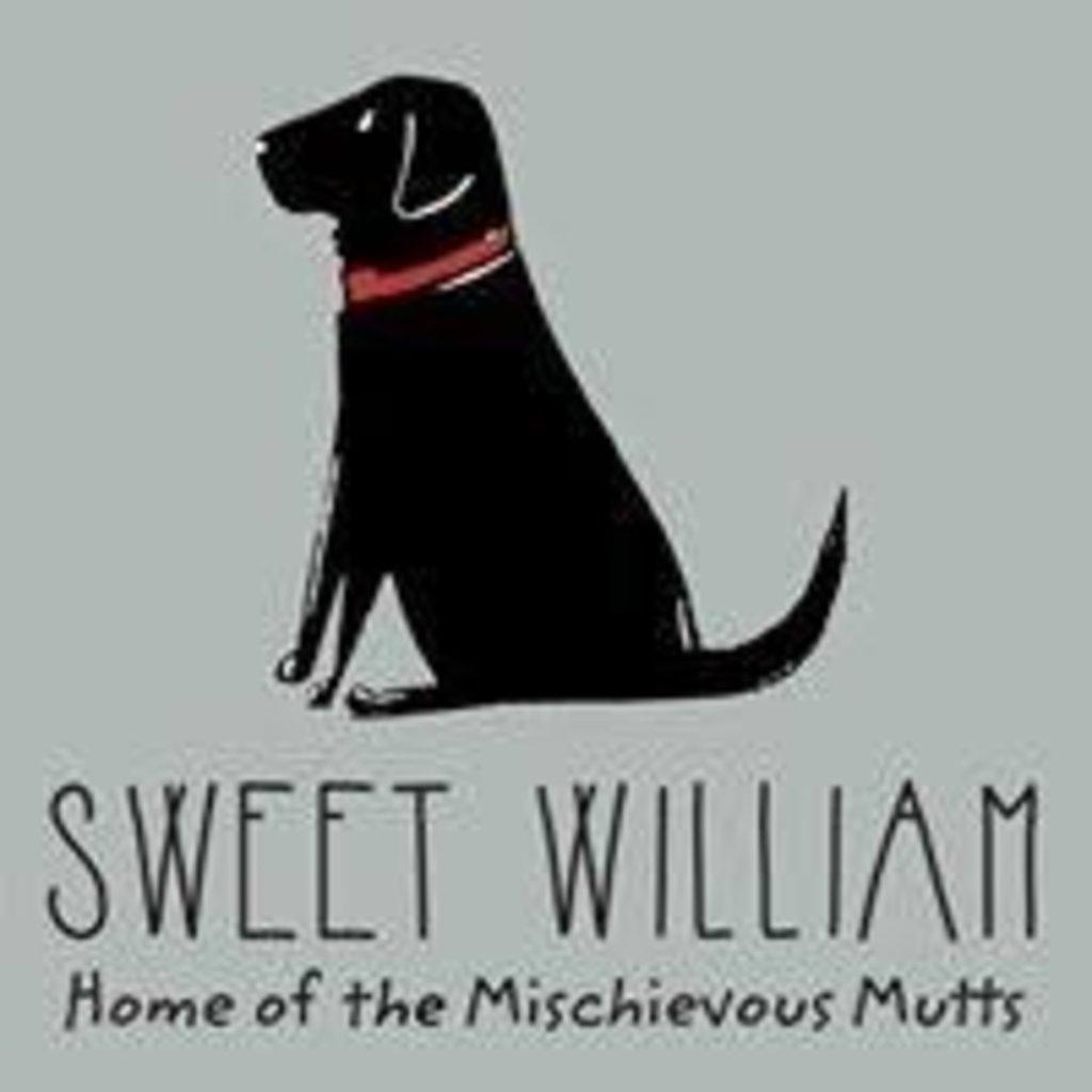 Sweet William - Labradoodle / Cockapoo Mok