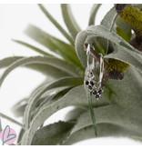 KARMA Oorringen zilver925 met zwarte zirconia