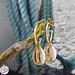 Go Dutch Label Gouden creolen met cowrie schelp