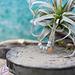 ZAG  Bijoux Zag bijoux rosegoud ketting met zacht blauwgrijzige kralen