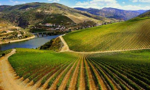 Voor de Beste Smaak, Telt Elke Graad: Ribera del Duero