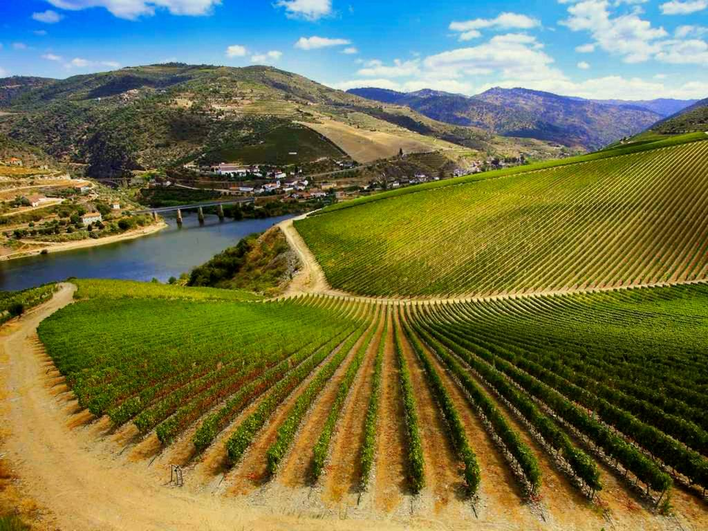 For the Best Taste Every Degree Counts: Ribera del Duero