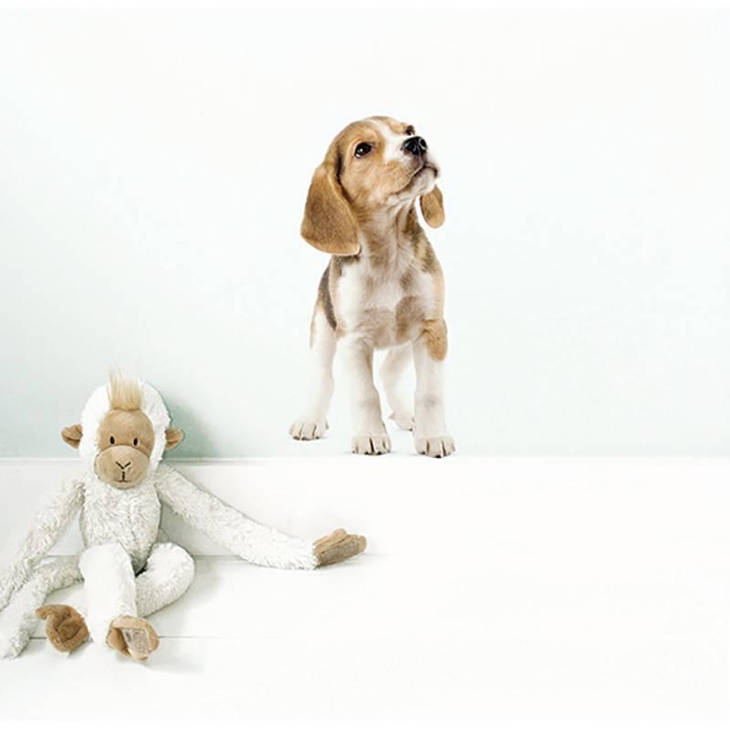 KEK Amsterdam Autocollants animaux domestiques