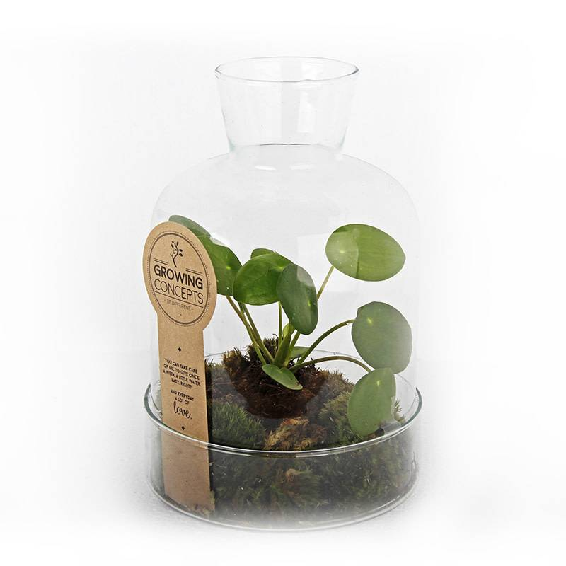 Other brands Plante Growing concept