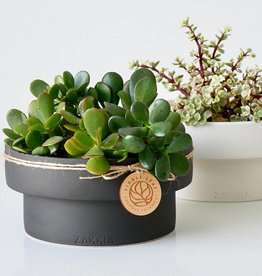 Zakkia Podium Pot