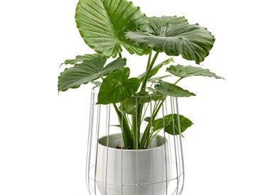 Airplants & pots de fleurs