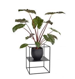 Serax Small display plantenrek