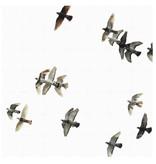 IXXI Birds wanddecoratie