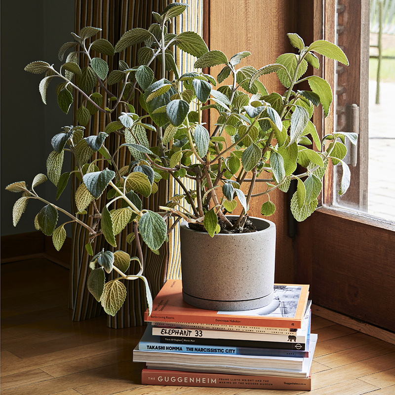HAY Plant pot XXL