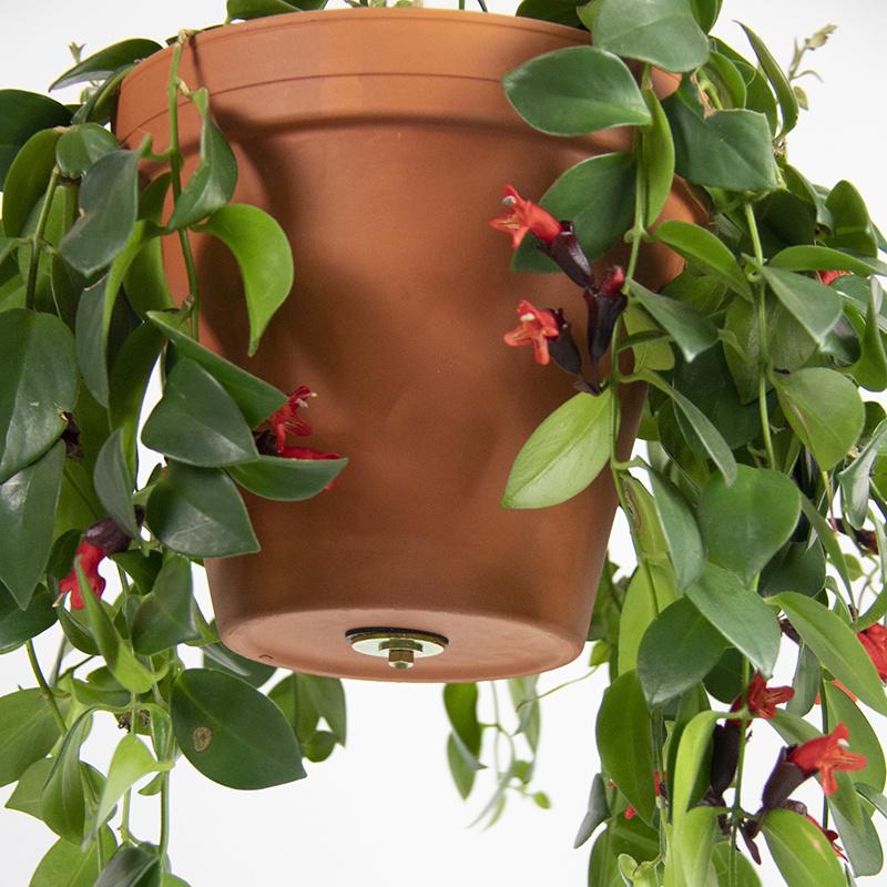 Botanopia Bolty - ophangsysteem voor plantenpotten