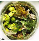Growing Concepts Bolder Botanique