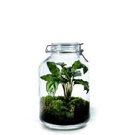 Growing Concepts Jar Large Calathea
